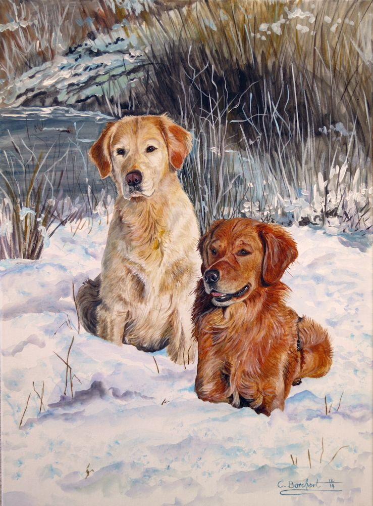Goldens Winter